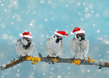 Christmas Card With Funny Bird...
