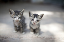 Two Kittens Together