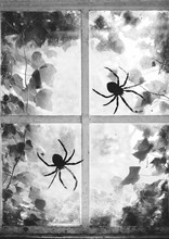 Spiders On An Old Window