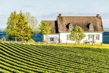 Landscape View Of Farm In Ile D'Orleans, Quebec, Canada With Green Rows Of Plants At Field With House And Wooden Fence