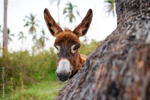 Deurstickers Ezel Donkey Baby