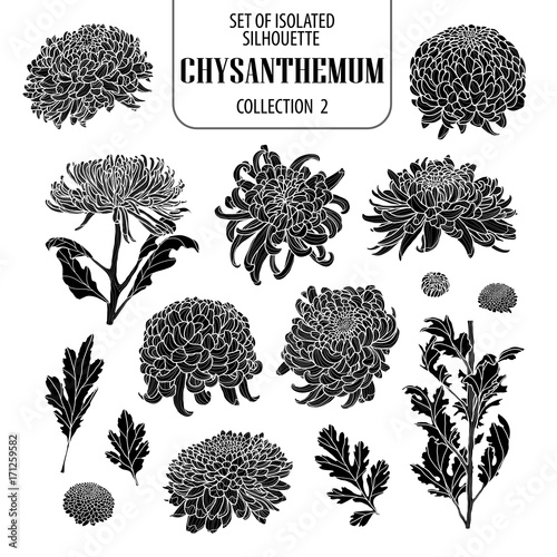 Stampa su Tela Set of isolated chrysanthemum collection 2