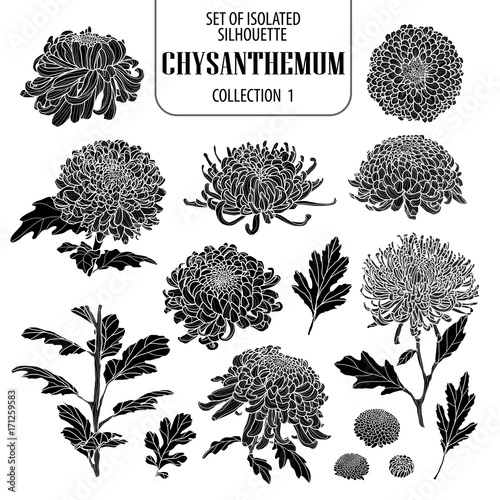 Vászonkép Set of isolated chrysanthemum collection 1