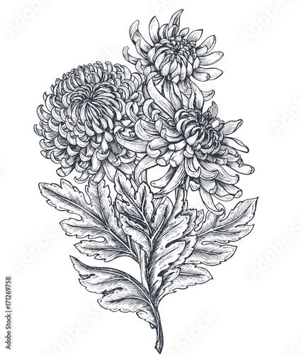 Vector bouquet with hand drawn chrysanthemum flowers Fototapeta