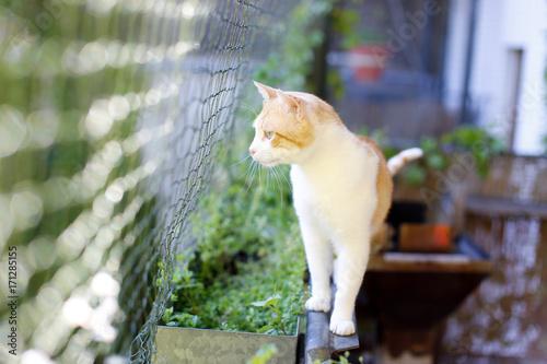 Obraz na dibondzie (fotoboard) Kot na bezpiecznym dla kota balkonie z kabiną