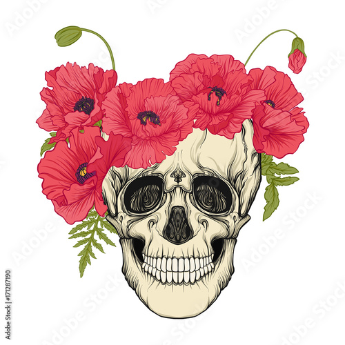 Printed kitchen splashbacks Human skull with a wreath of red poppies on the head. Stock line vector illustration.