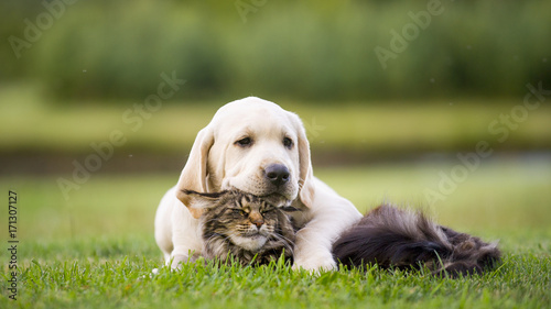 Poster de jardin Chat cute puppy an cat friendship