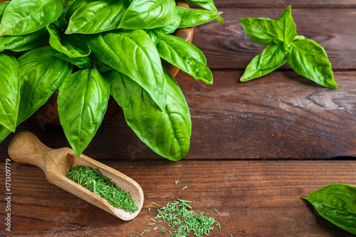 Obraz Fresh juicy aromatic herb basil and inflorescence in a pattern on a wooden background with copy space in a rustic style - fototapety do salonu