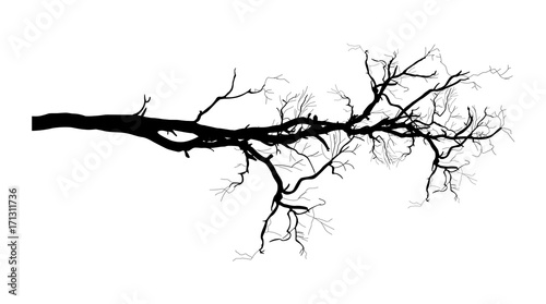 Fotografie, Tablou Dry Tree Branch Vector Shape Design