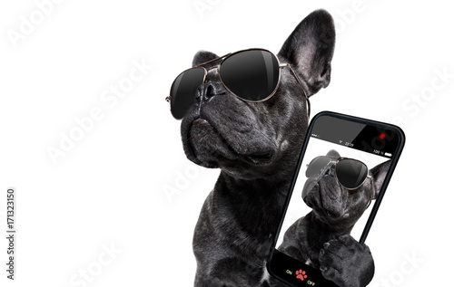 Tuinposter Crazy dog posing dog with sunglasses