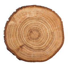 Tree wood cut isolated on white background.