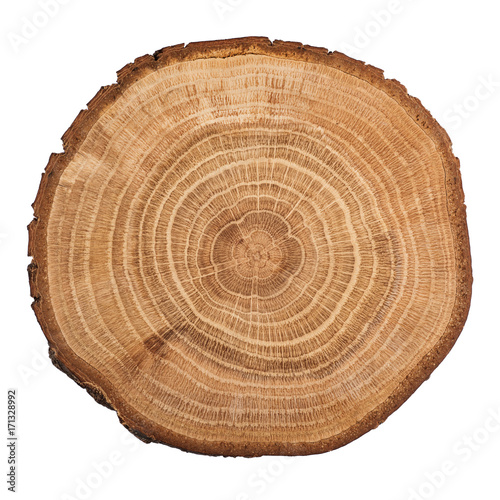 Photographie  Tree wood cut isolated on white background.
