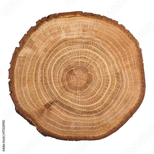 Fotografija  Tree wood cut isolated on white background.