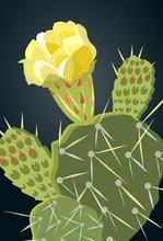 Prickly Pear Cactus Yellow Flo...