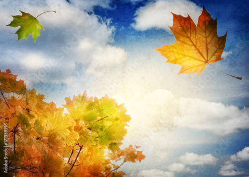 Aluminium Prints Autumn Autumn landscape. Autumn tree leaves sky background.