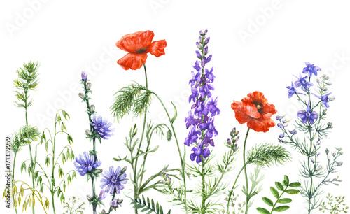 Watercolor wild flowers border - 171339959