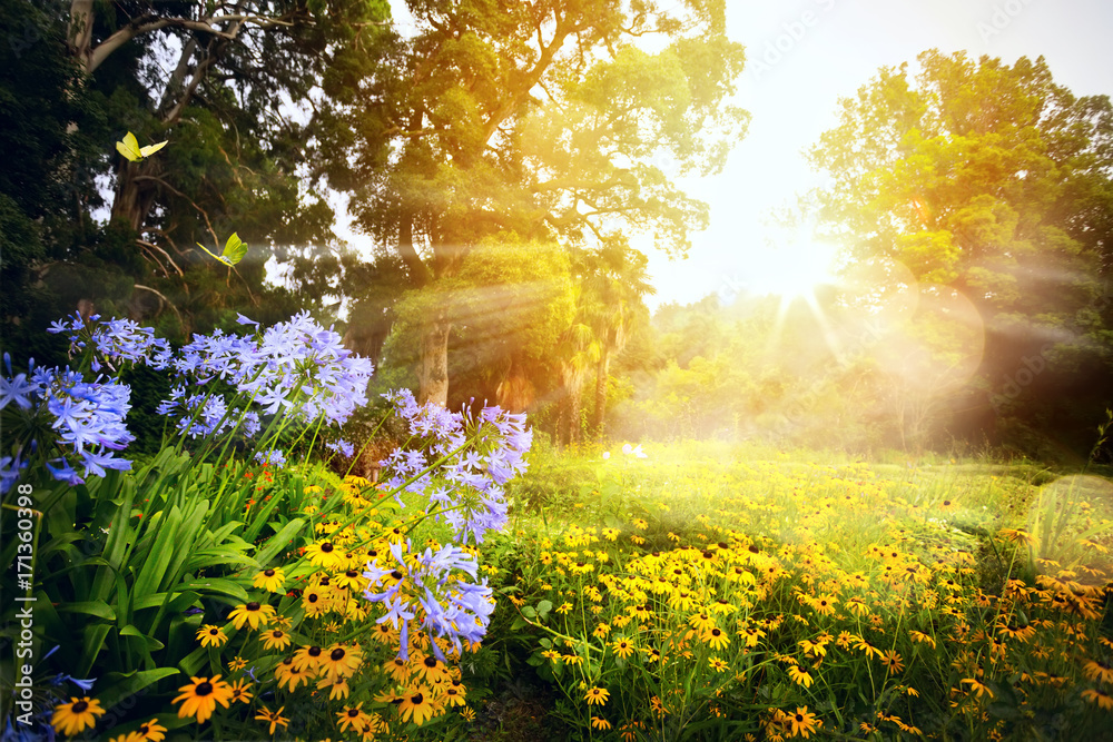Fototapeta art beautiful landscape; sunset in the park