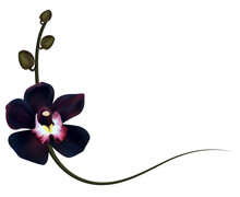 Realistic Black Orchid Frame, ...