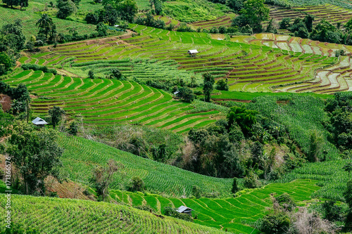 Poster Rijstvelden Rice terrace in the countryside suround by mountains