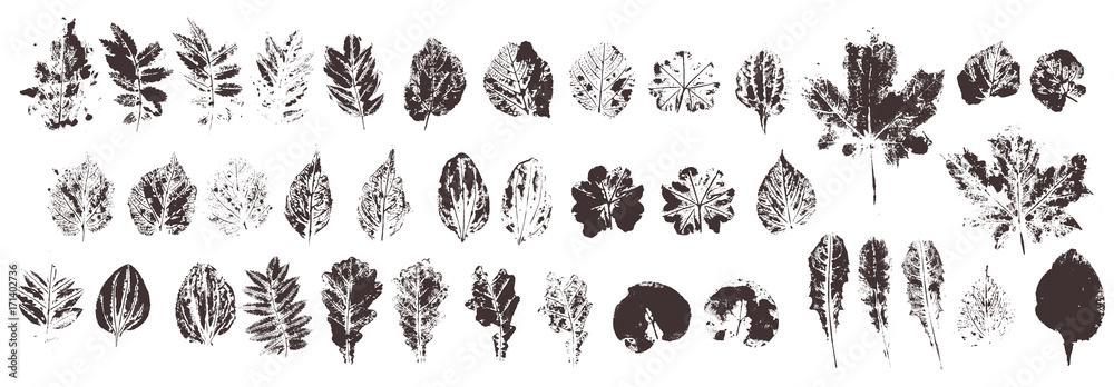 Fototapeta Set with hand made ink stamp leaves. Objects isolated on white. Black and white leaf blots. Monochrome artistic floral collection. Hi detailed texture of forest leaves