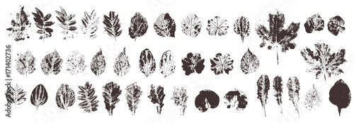 Set with hand made ink stamp leaves. Objects isolated on white. Black and white leaf blots. Monochrome artistic floral collection. Hi detailed texture of forest leaves - fototapety na wymiar