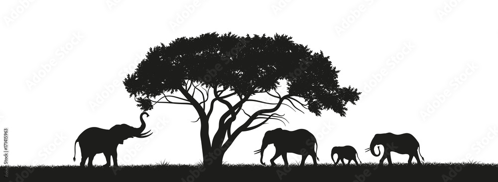 Fototapeta Black silhouette of elephants and trees in the savannah. Animals of Africa. African landscape. Panorama of wild nature. Vector illustration