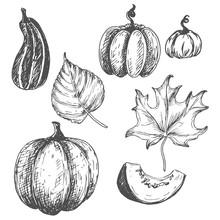 Botanical Pumpkins And Leaves ...