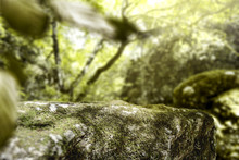 Moss Space