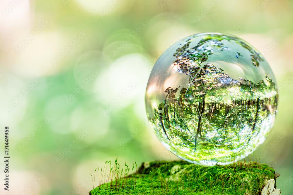 Fototapeta コケとガラスの地球儀