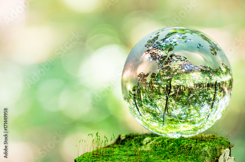 Fotografie, Obraz  コケとガラスの地球儀
