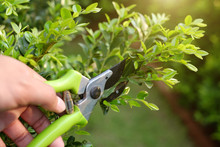 Pruning Green Plants With Prun...