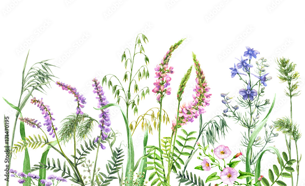 Fototapety, obrazy: Watercolor wild flowers border