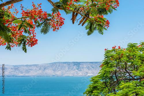 Valokuva View of the Sea of Galilee, Tiberias, Israel