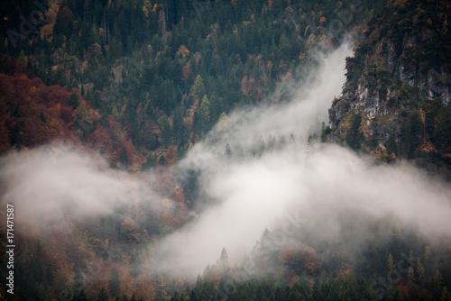 Fototapeta Bavarian forest obraz na płótnie