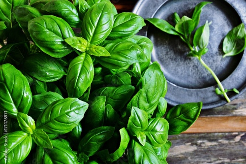 Cadres-photo bureau Condiment Fresh Basil