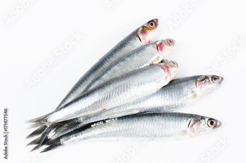 Photo Anchovies on white background.