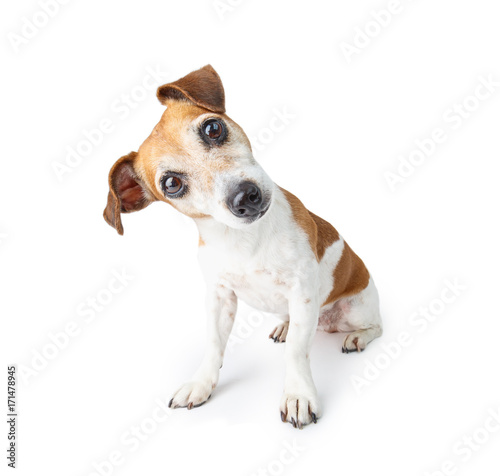 fototapeta na drzwi i meble Adorable curious dog sitting on white background. Pet theme. Funny pup