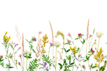 Wildflowers And Leaves On White Background
