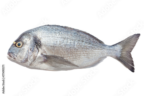 Poster Fish dorado fish, clipping path, isolated on white background
