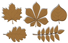 Collection Of Hand Drawn Leaves Isolated On White Background. Vector.