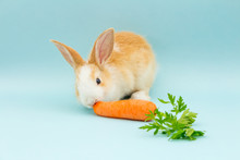 Adorable Conejo