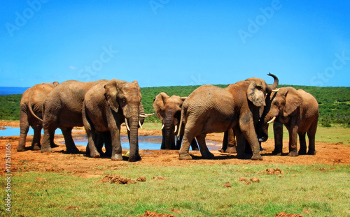Foto op Plexiglas Olifant Elephants at watering hole. African wildlife. Elephant Love. Amazing image. Sweet memories of travel to Africa and African safari. Postcard. Wild animals in National Parks