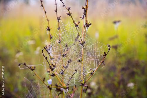 Plakat krople rosy na pajęczynie jako tło