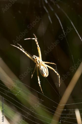 Plakat pająk siedzi na mokrej sieci