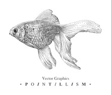 Vector Illustration With Goldfish Drawn By Hand. Graphic Drawing, Pointillism Technique. Underwater World. Black And White Animal Element Isolated On White