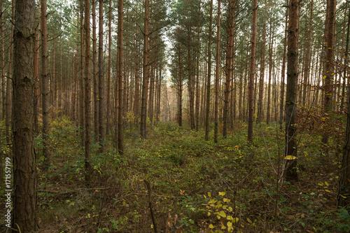 Tuinposter Weg in bos waldweg
