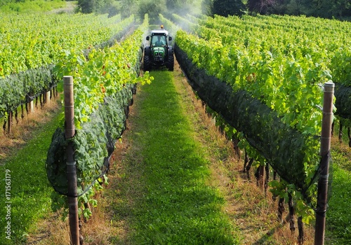 Cuadros en Lienzo  Green tractor among  the vineyards on the borders between Italy and Slovenia