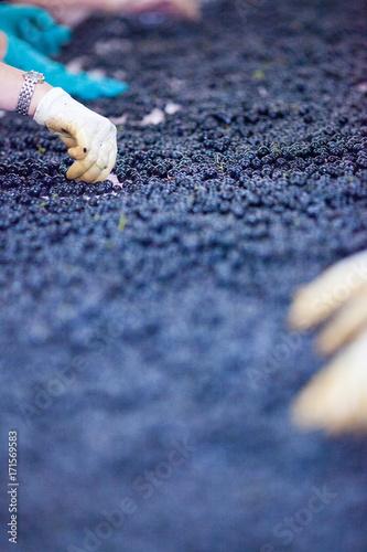 Spoed Foto op Canvas Lavendel vendange vinification vin