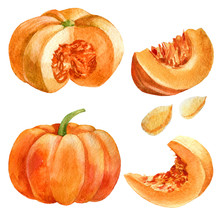Watercolor Illustration. Pumpk...