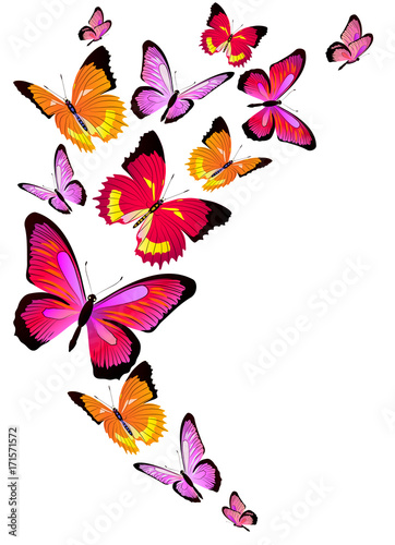 Tuinposter Vlinders beautiful pink butterflies, isolated on a white